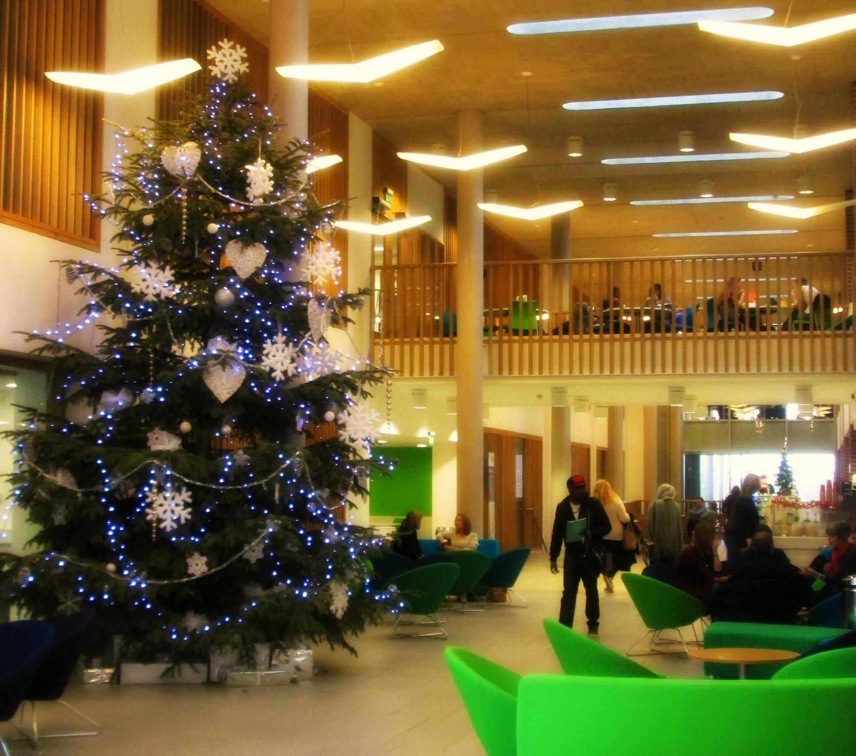Newman Christmas Trees.Encounter The Gospels Through First Century Eyes Newman