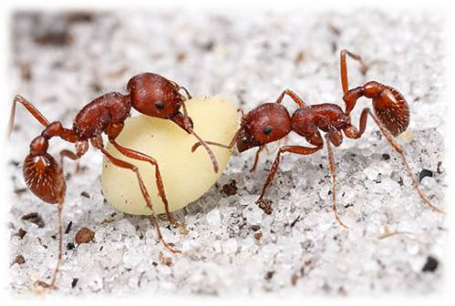 God, Science and the Bible: More to Consider About the Ant ...