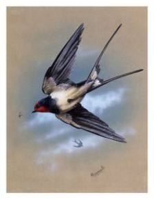Painting swallow